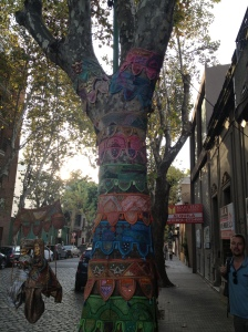 Even the Palermo trees are well-dressed!