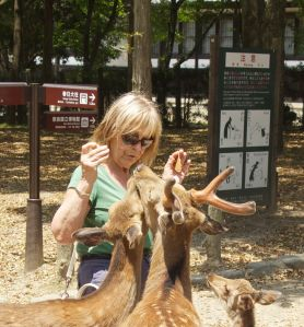 Jonathan's mum getting up close and personal with the deer at Nara