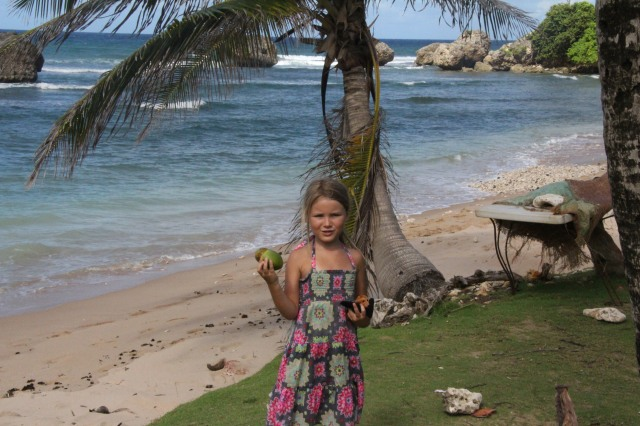 Finding coconuts on the wild and remote East Coast